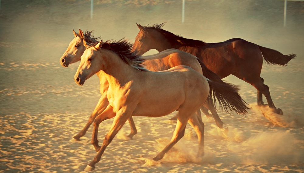 Home Bild Pferde.jpg