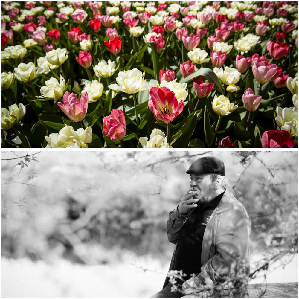 Keukenhof, Holland MV Photography Melbourne Photographer