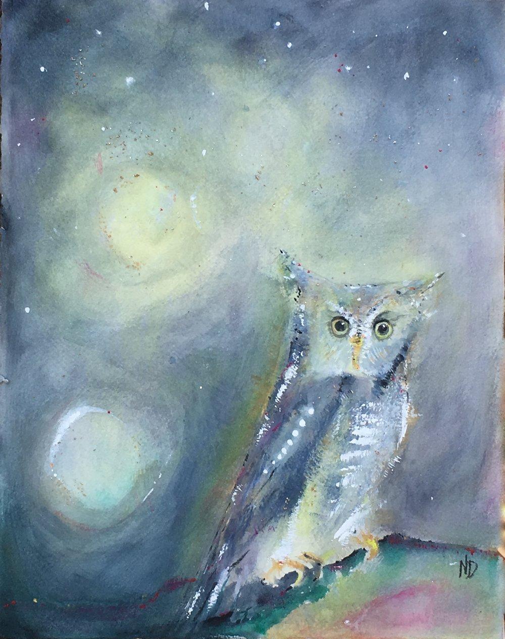 screech owl esopus creek