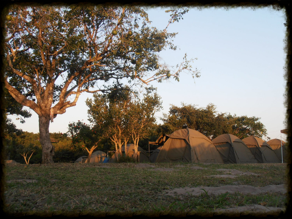 The tents at Sodwana Bay - for students and teachers alike.