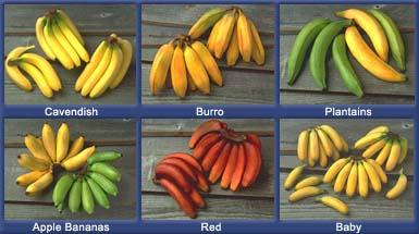 Banana Images