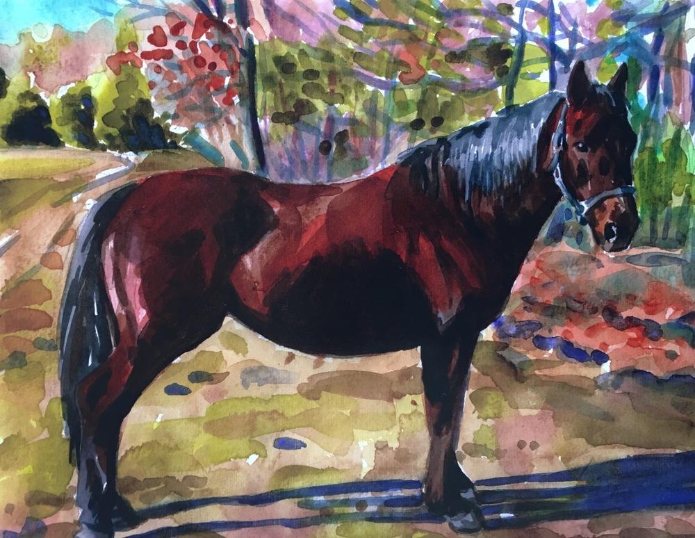 horse portrait 3.jpg