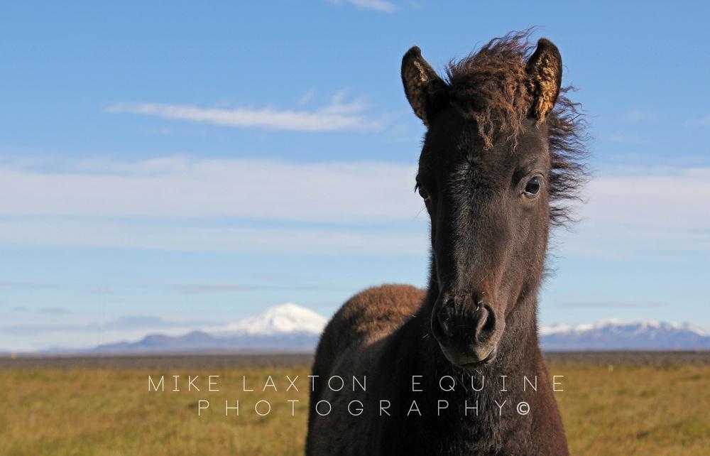 Foal Mountains Cropped Watermark.jpg
