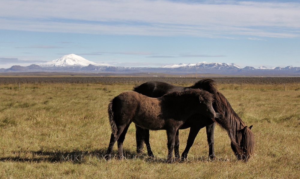 Foal and Parent Cropped site.jpg