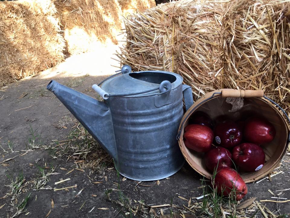 Apple Orchard Party - apple basket