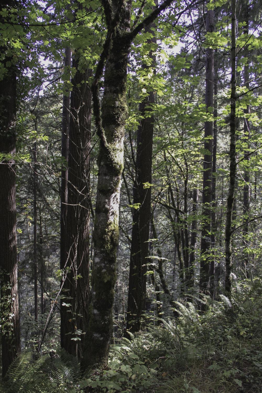 Forest Park, Portland OR, 2016