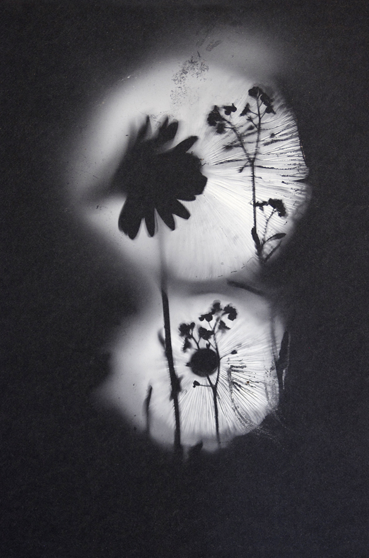 Small White Spore Print with Flowers on Black Paper