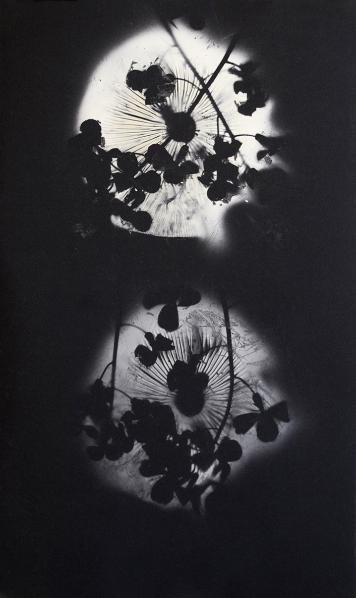 Medium White Spore Print with Flowers on Black Paper