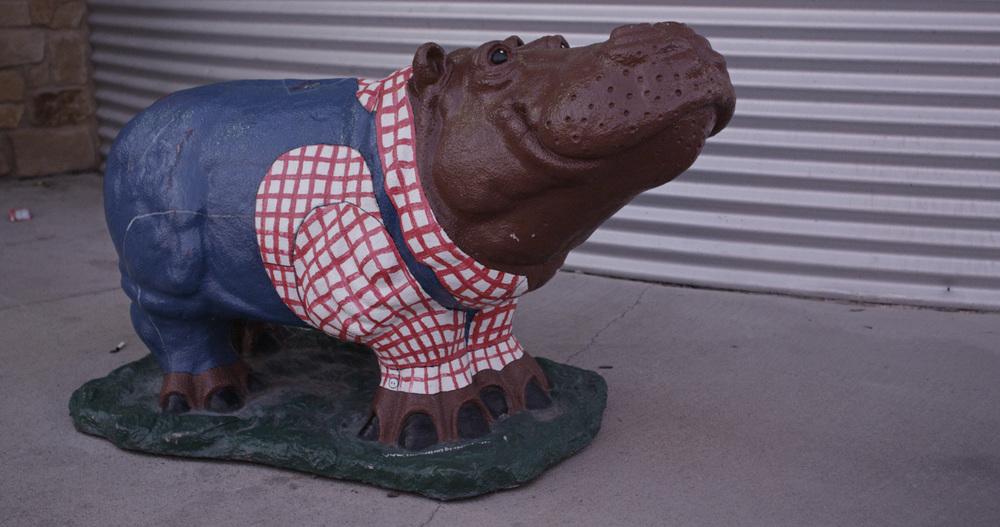Hippo Farmer.jpg