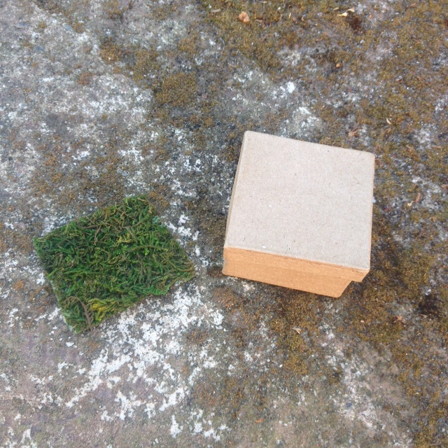 Box & moss for mini garden - A DIY Project for Mothers Day
