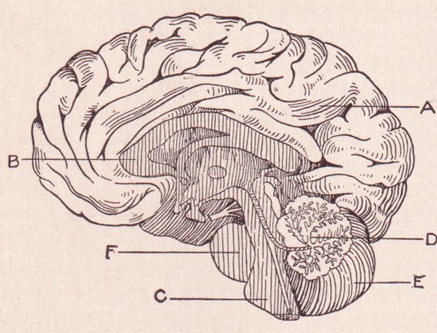 Pornography Addiction and the Brain