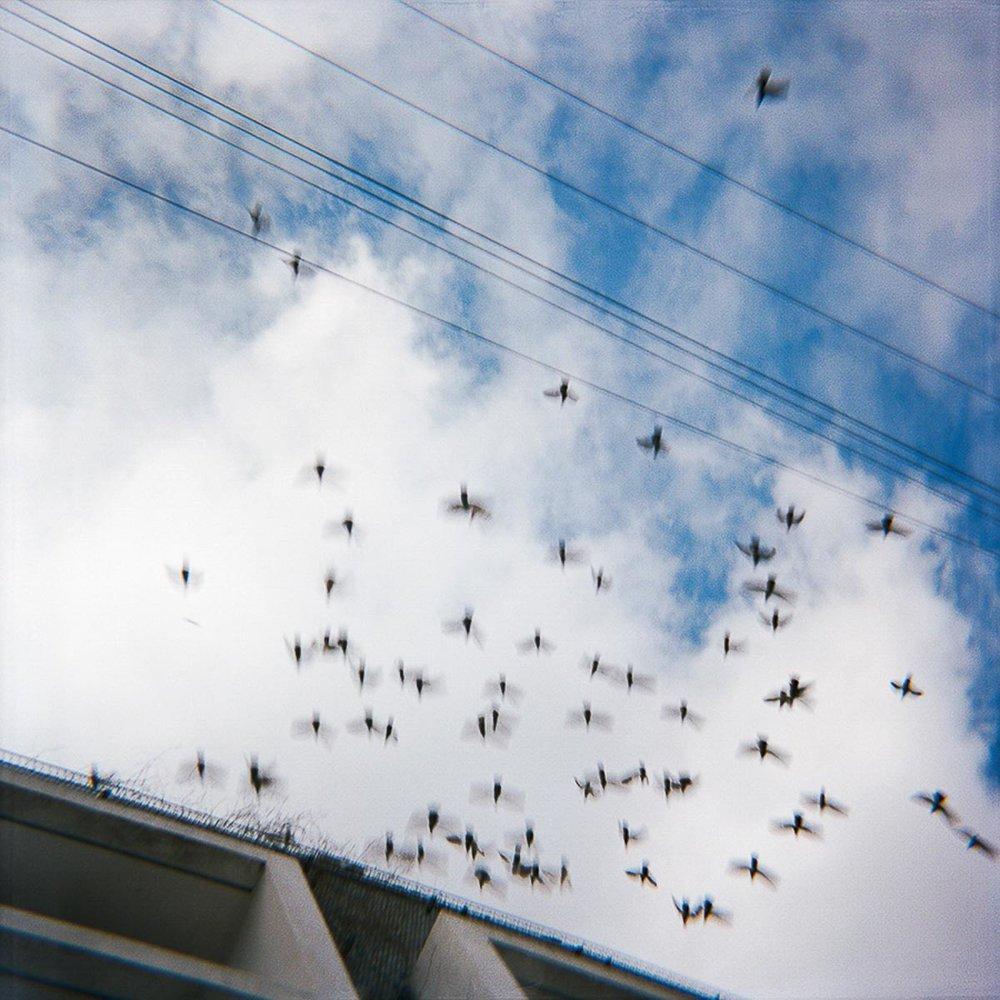 Falling Birds.jpg