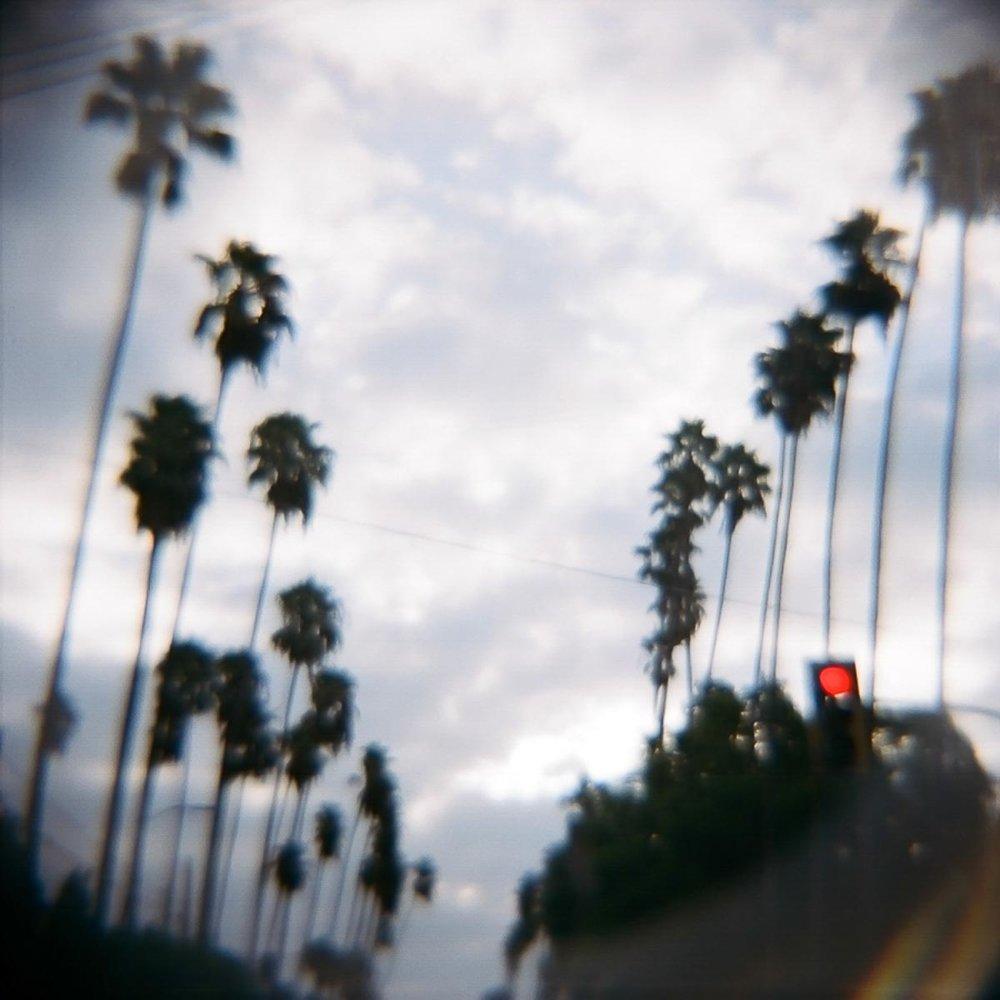 Hollywood Palms.jpg