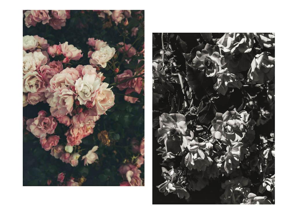 flora_france_1.jpg