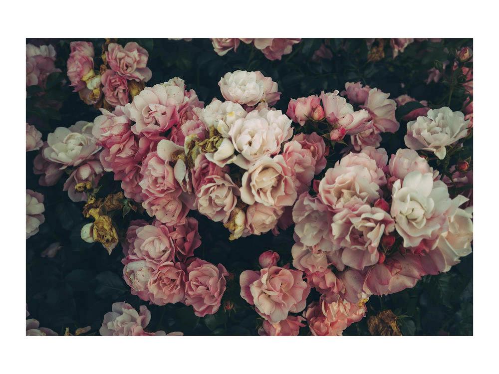 flora_france.jpg