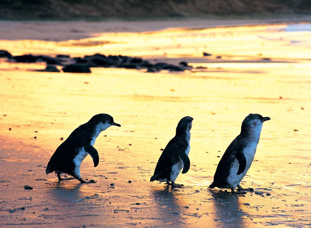 Photo courtesy of australiantraveller.com