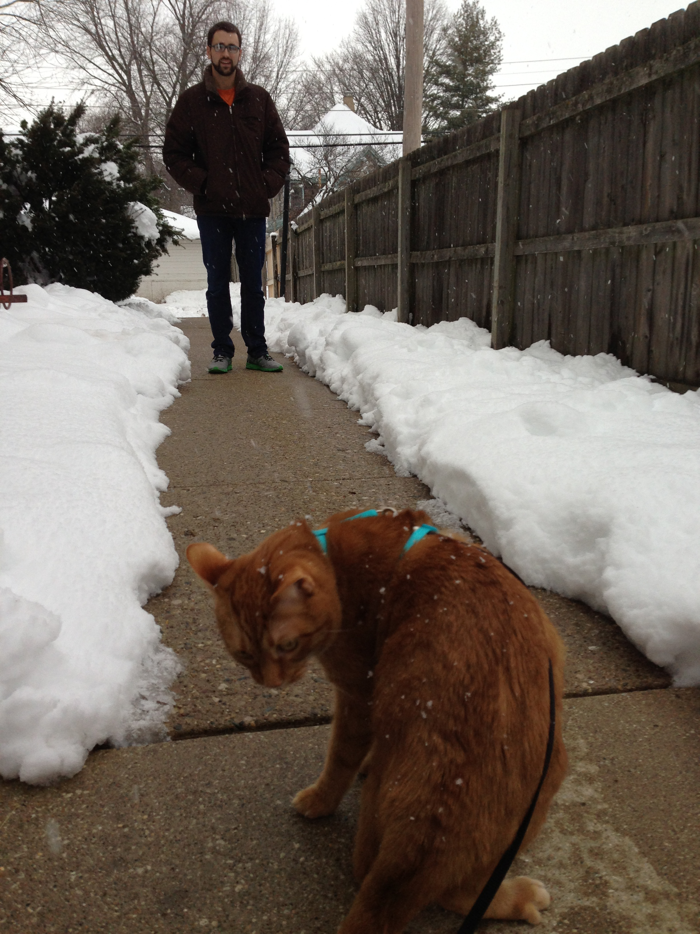 Walter the Cat is not so sure about the snow. Our poor kitties and the things we get them into...