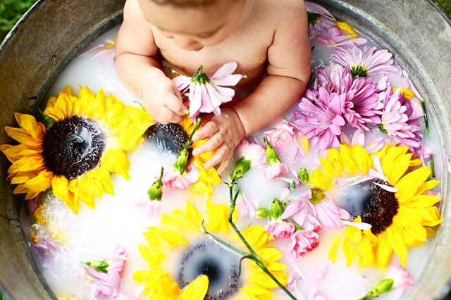 All the sunflowerssssss!!!! Had so much fun shooting Maddie Rae's 6 month pictures! Such a doll!!!!!! • • • #babygirl #6month #sunflowers #milkbath #love #bathtime #baby #daddysgirl