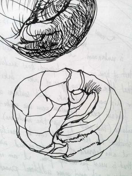 A Sketch Showing the Structure of a Moonsnail Shell That I Made Using Noodler's Pen and Ink