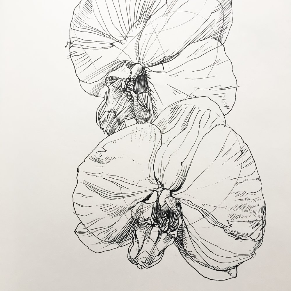 "Orchids, 8.5"" x 10""  ink on paper by Melissa Carmon"