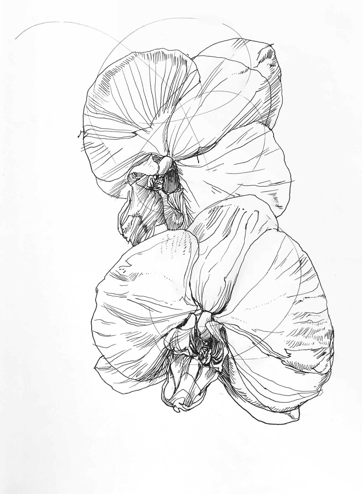 line drawings melissa carmon