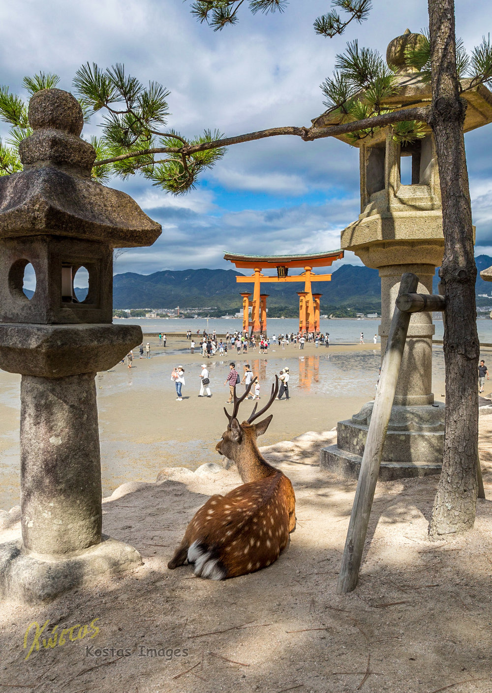 20160827-IMG_4207-Deer at Itsukushima Shrine.jpg