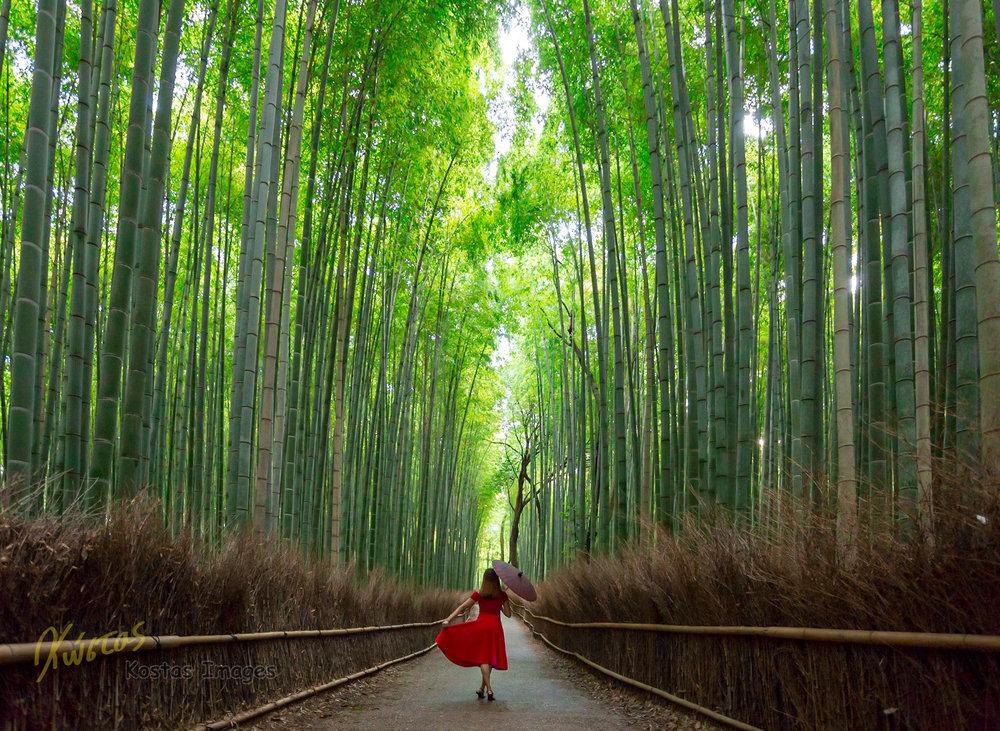 20160904-IMG_7098-Bamboo Forest portrait.jpg