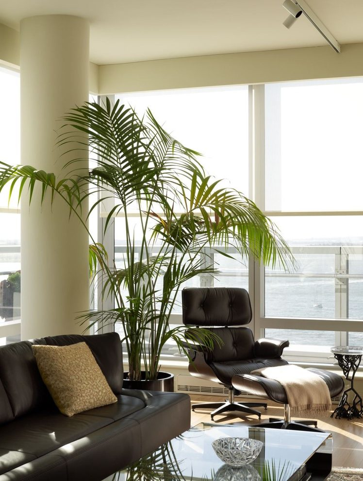 palm-tree-living-room-decor-living-room-mediterranean-with-palm-tree-decor-for-living-room-l-abdffa2d290e060e.jpg