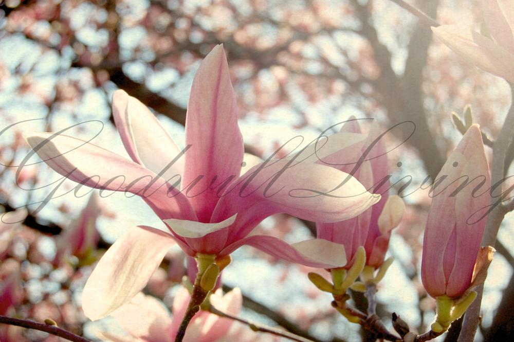 pinkflower - logo.jpg