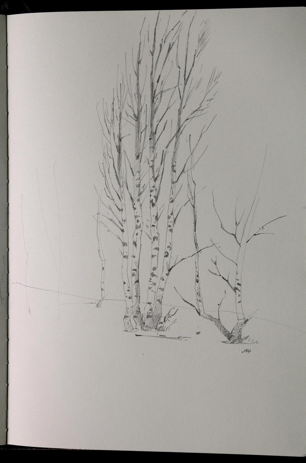 Birch trees in snow. Pencil, sketchbook.