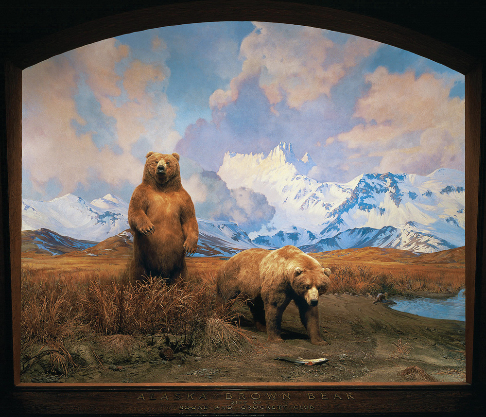 The brown bears of alaska set in a dramatic landscape certainly plays tricks on your eyes we see water on the right and at first we might presume its