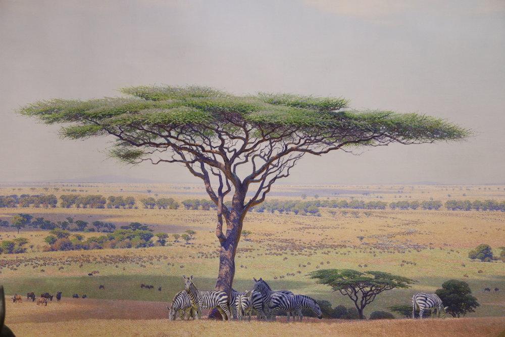 plains group, serengeti 05.JPG