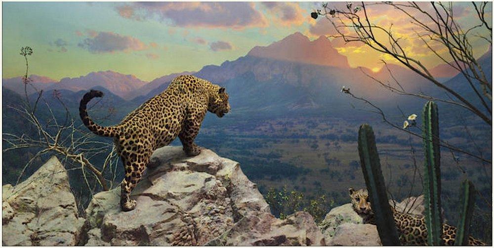 Leopard diorama, AMNH, NYC.