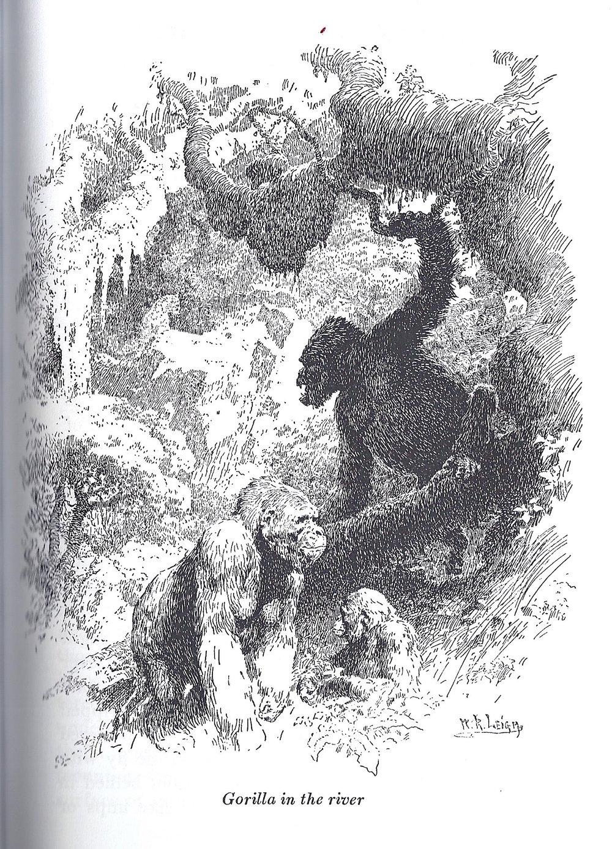 Gorilla in the river.