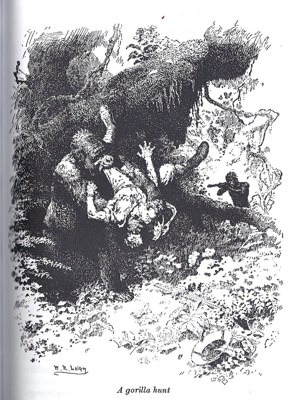 A Gorilla hunt