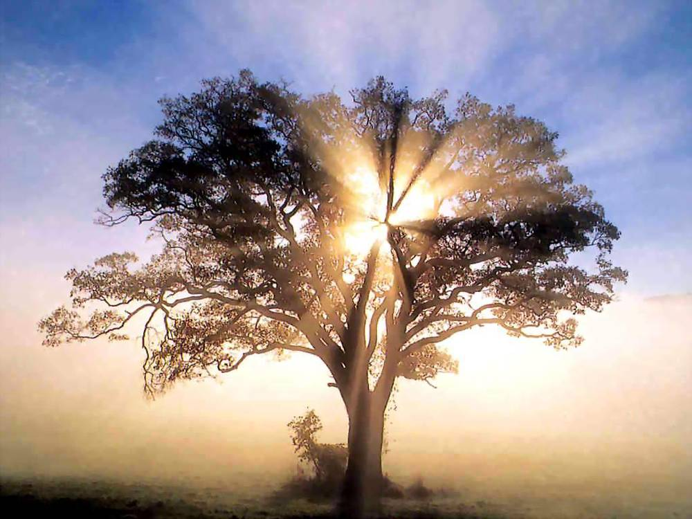 America_-_oak_tree_in_new_england_sunrise.jpg