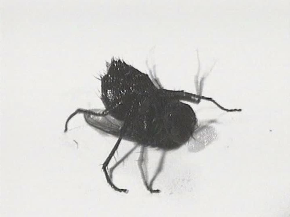 Douglas Gordon, Film Noir (Fly)