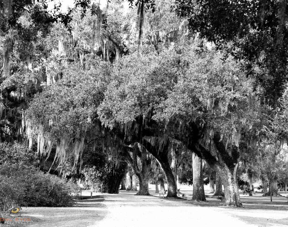 Avery Island Louisiana