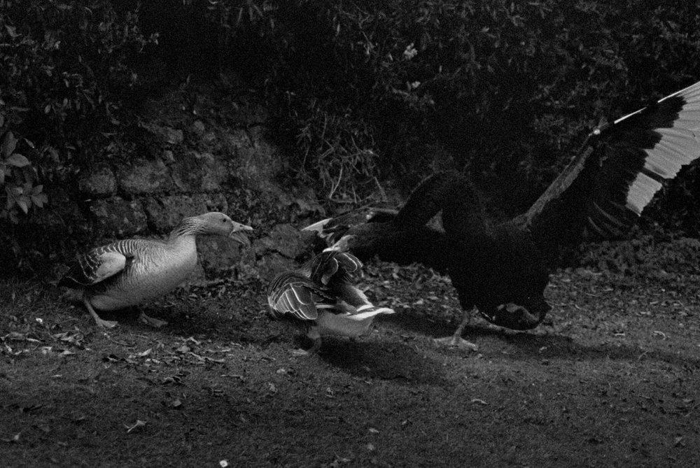 Ducks 4.jpg