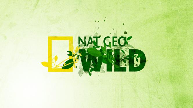 natgeo-wild-02.jpg
