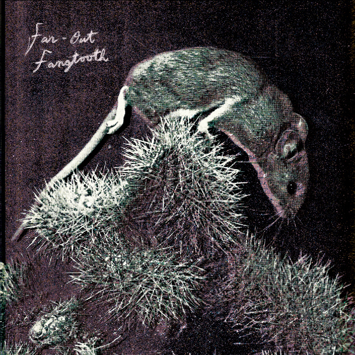 A 7-inch slab of greatness from Far-Out Fangtooth.