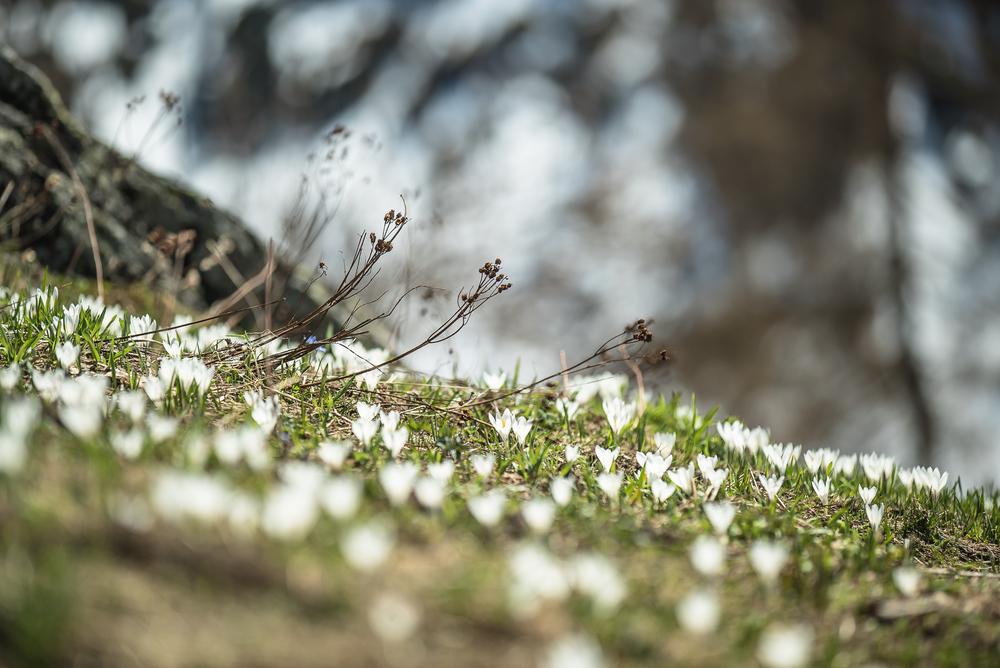 Otro Elements Spring-03125.jpg
