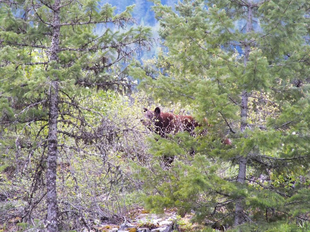 Black Bear -LardeauRiverAdventures.com.jpg