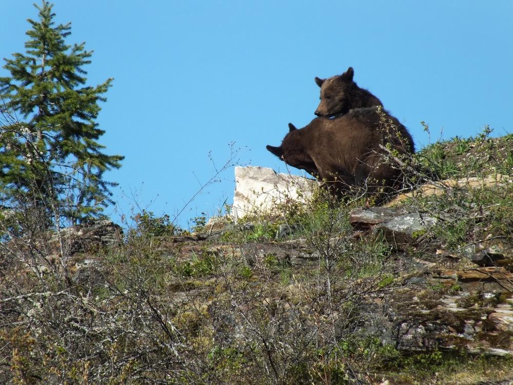 Grizzly Cubs - LardeaRiverAdventures.com.jpg