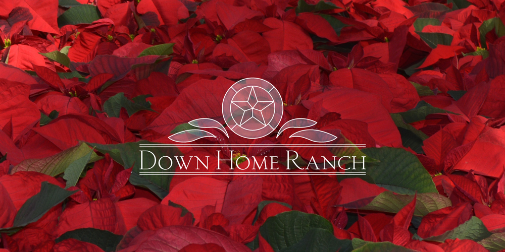 DHR-logo-poin.jpg