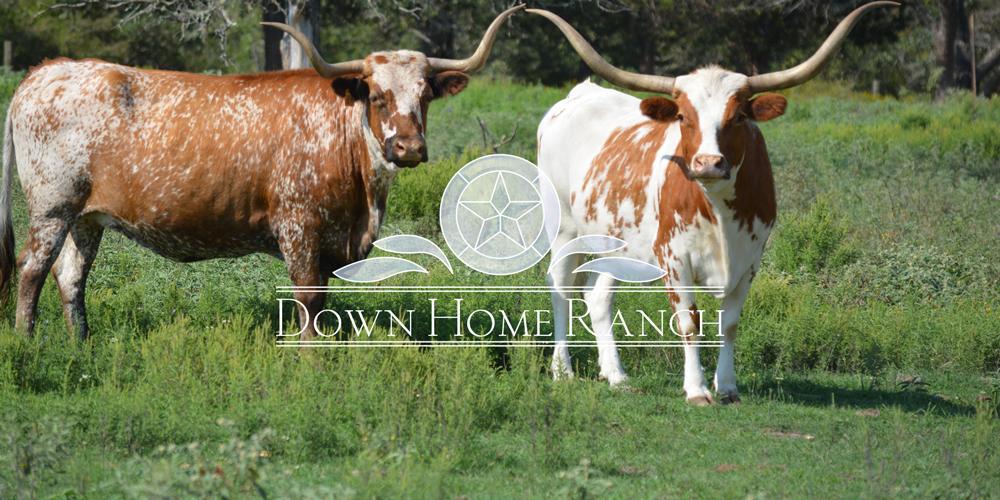 DHR-logo-bulls.jpg