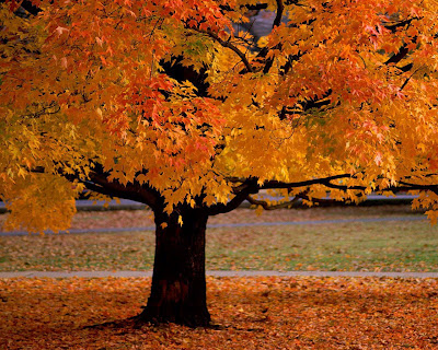 autumn_tree.jpg