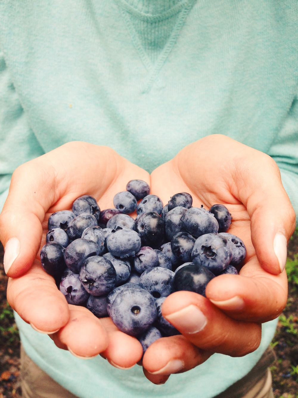 okay, THESE berries I picked with my own two hands (pictured)