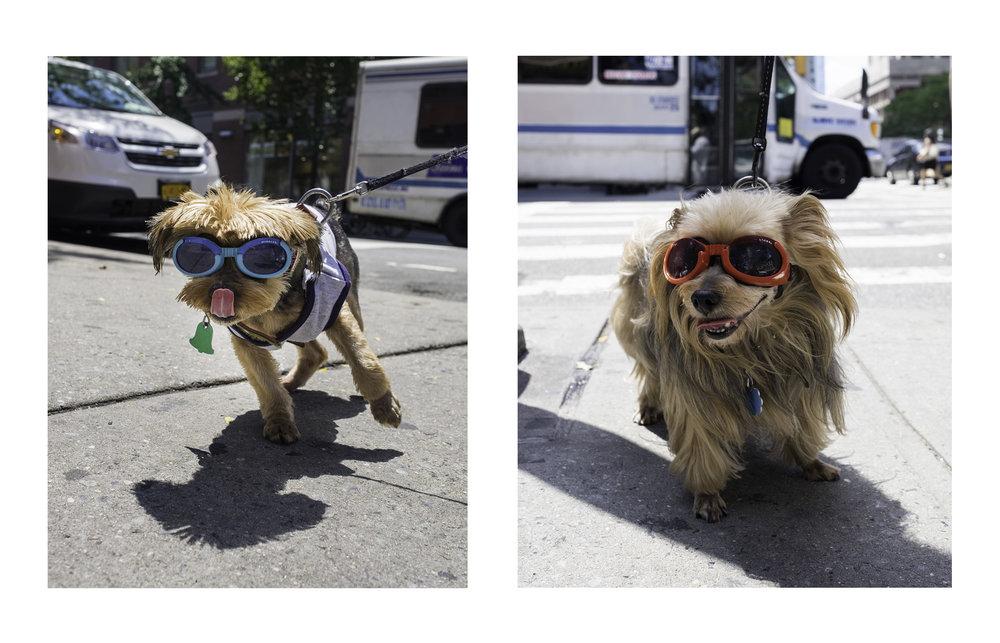 Dogs_Diptic.jpg