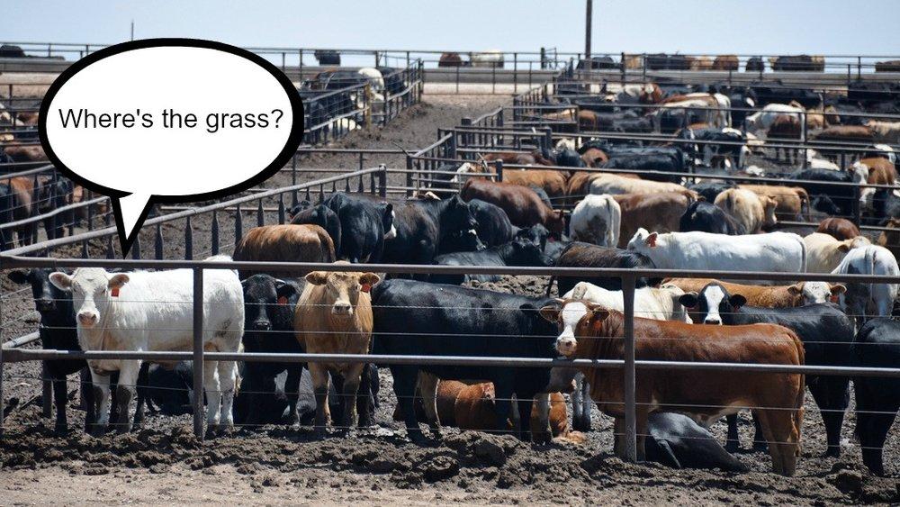Where's The Grass.jpg
